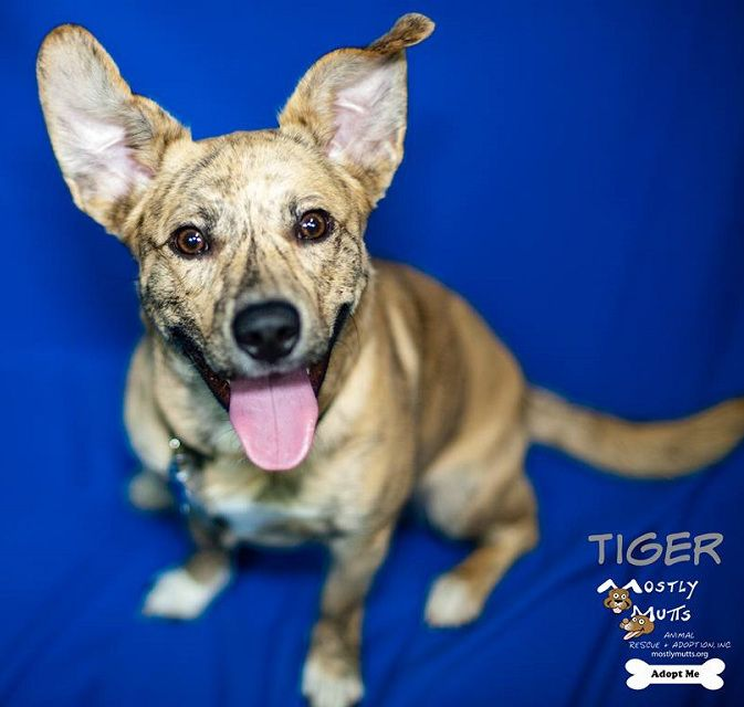 Cojack Dog For Adoption In Kennesaw Ga Adn 548758 On Puppyfinder