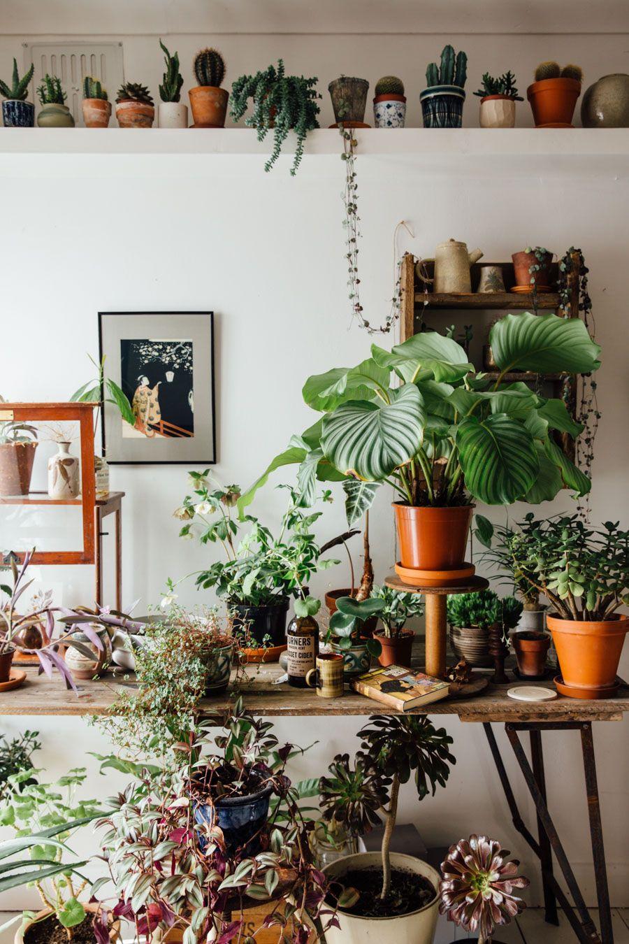 Deko, Surfhouse, Pflanzentöpfe, Zimmerpflanze, Finger, Regale, Bepflanzung, Trautes  Heim, Gemüse