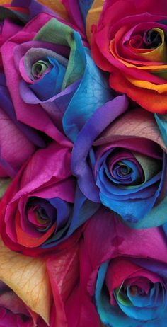 Gay Pride Rainbow Roses Themed Light Weight (1x4)