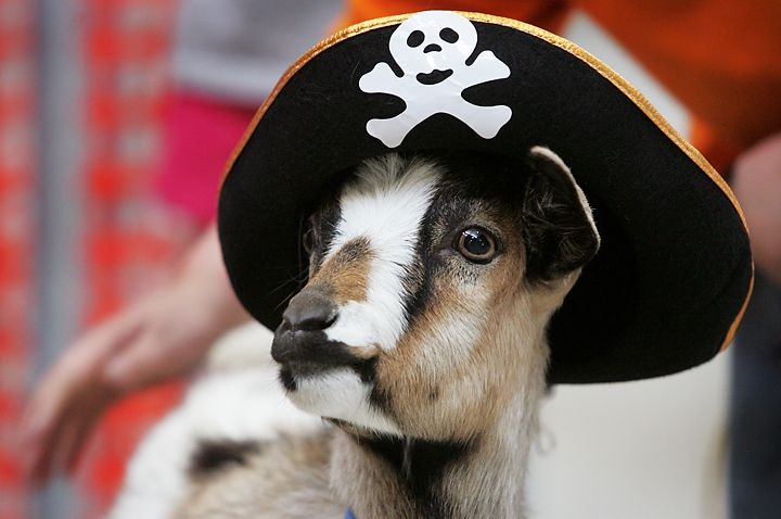 Even Goats Dress Up For Halloween Dog Costumes Pet Goat Canine
