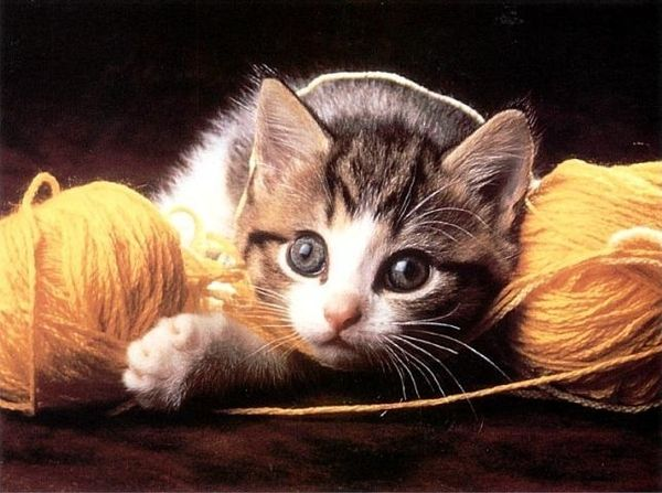 25 Cute Pictures Of Cats Playing With Yarn Cute Animals Kittens