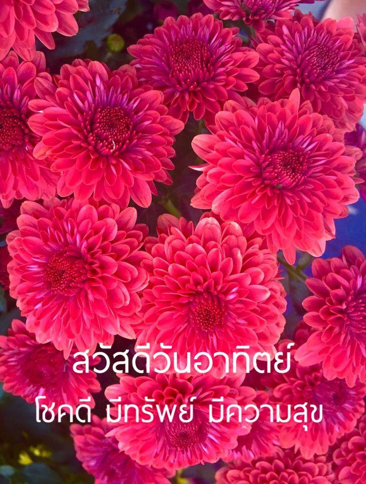 ป กพ นโดย Jaewwaew ใน สว สด ว นท งเจ ด ว นอาท ตย สว สด ตอนเช า