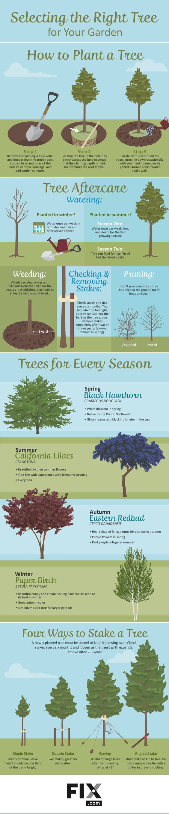 selecting the right tree for your garden short trees