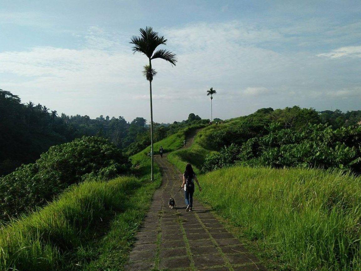 Wisata Ke Bukit Campuhan Bali Destinasi Dan Gallery Tempat