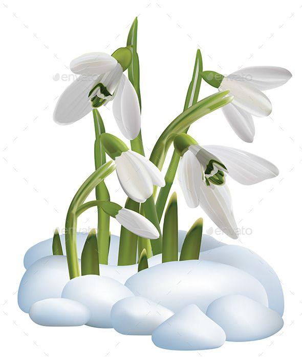 Spring Snowdrop Flowers On A Snow Flower Art Free Clip Art Clip Art
