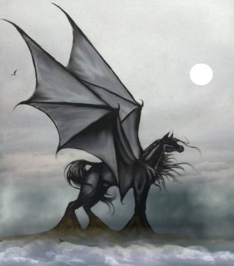 Black Wolf With Red Eyes Demon Stardancer And Nero Pegasus And