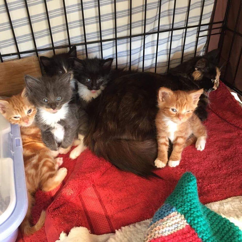 Tiny Kitten Fails To Grow But Succeeds At Stealing Hearts Kittens Fluffy Kittens Tiny Kitten