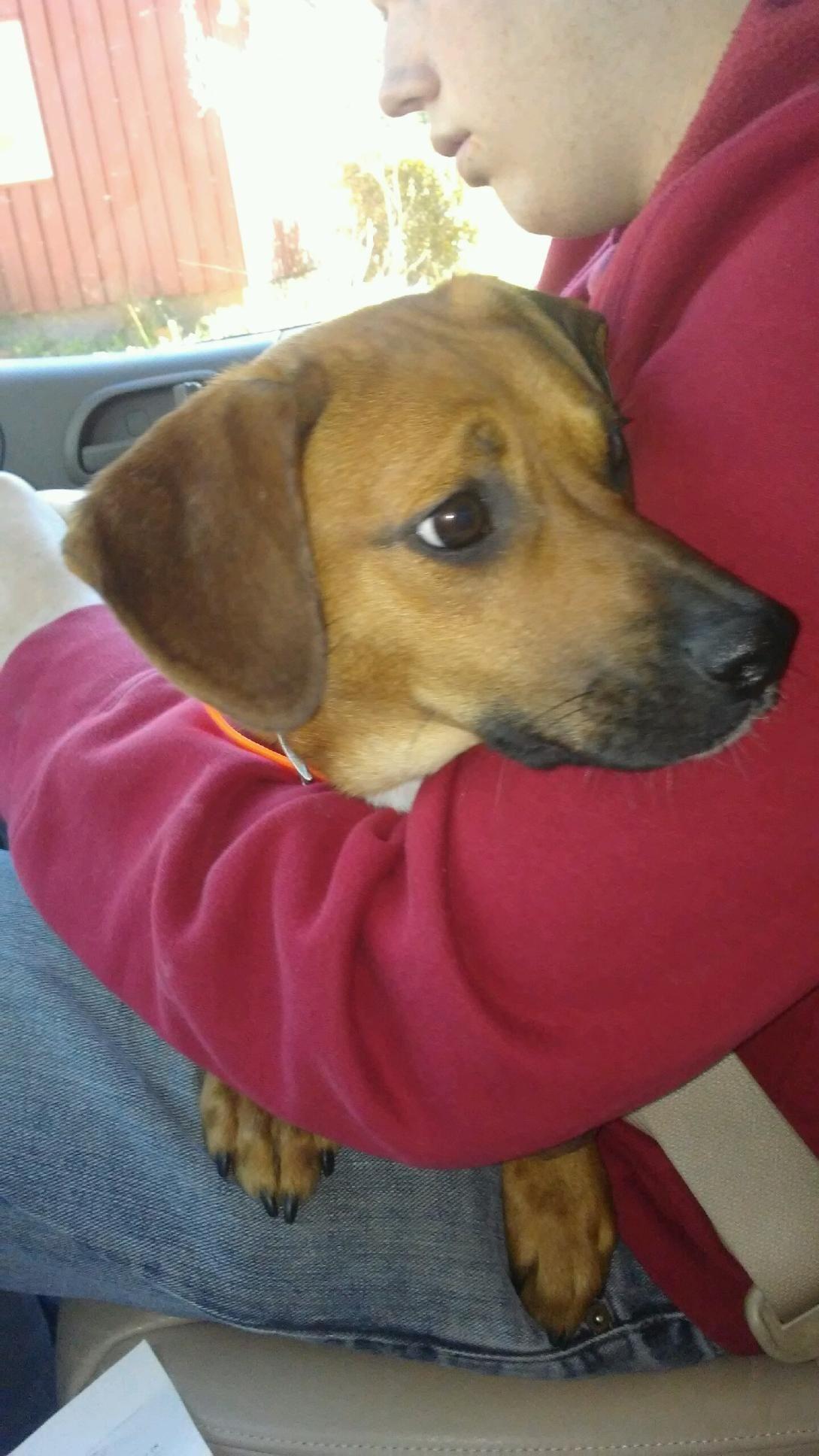Adopt millie on Dog adoption, Service dogs, Adoption