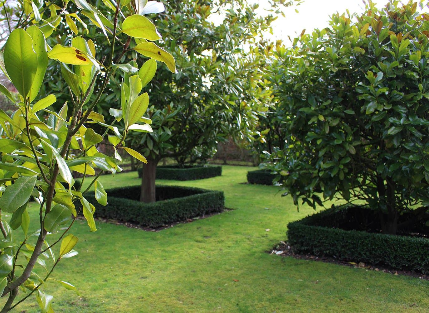 Garden trees for screening  David Hicks Magnolia grove with low clipped box hedging  Gardens