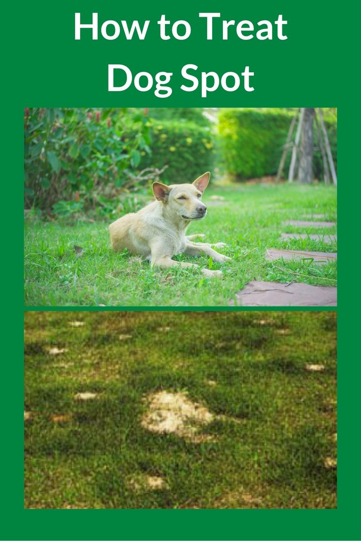 e083217a92cb8bc7eab31eca541d2a20 - How To Get Rid Of Dogs From Your Yard