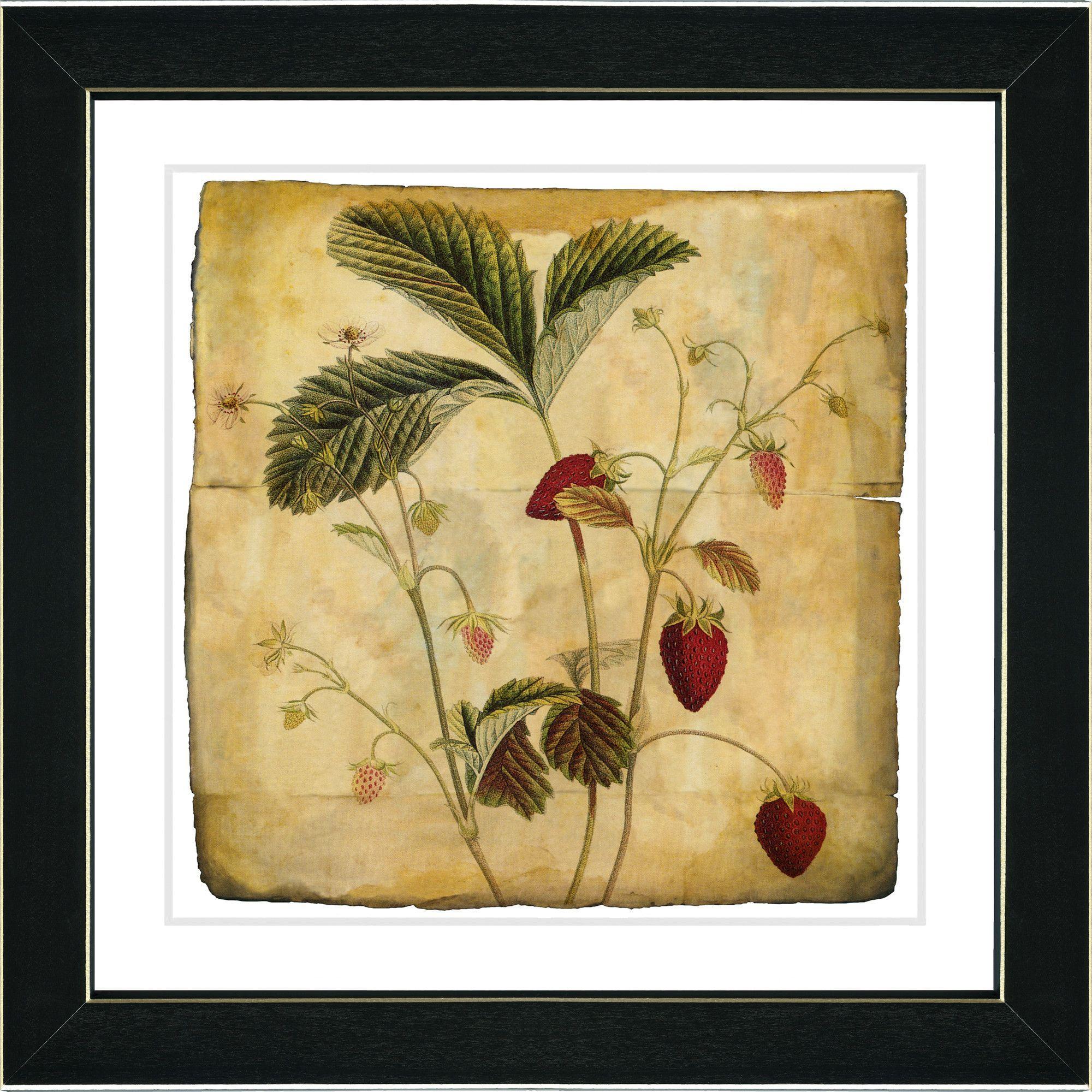 Vintage Botanical No. 06A by Zhee Singer Framed Giclee Print Fine ...