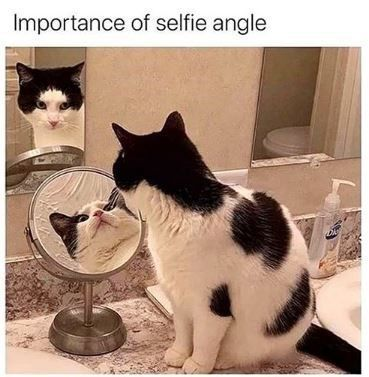 Purrfect Lazy Day Calls For Another Caturday (28 Cat Memes)