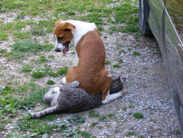 Cats And Dogs Dog Cat Funny Dogs Funny Animals