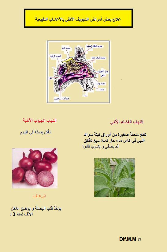 Pin By Mustapha Mahmoud Dif On لوحات عن وصفات عشبية صحية Movie Posters Pandora Screenshot
