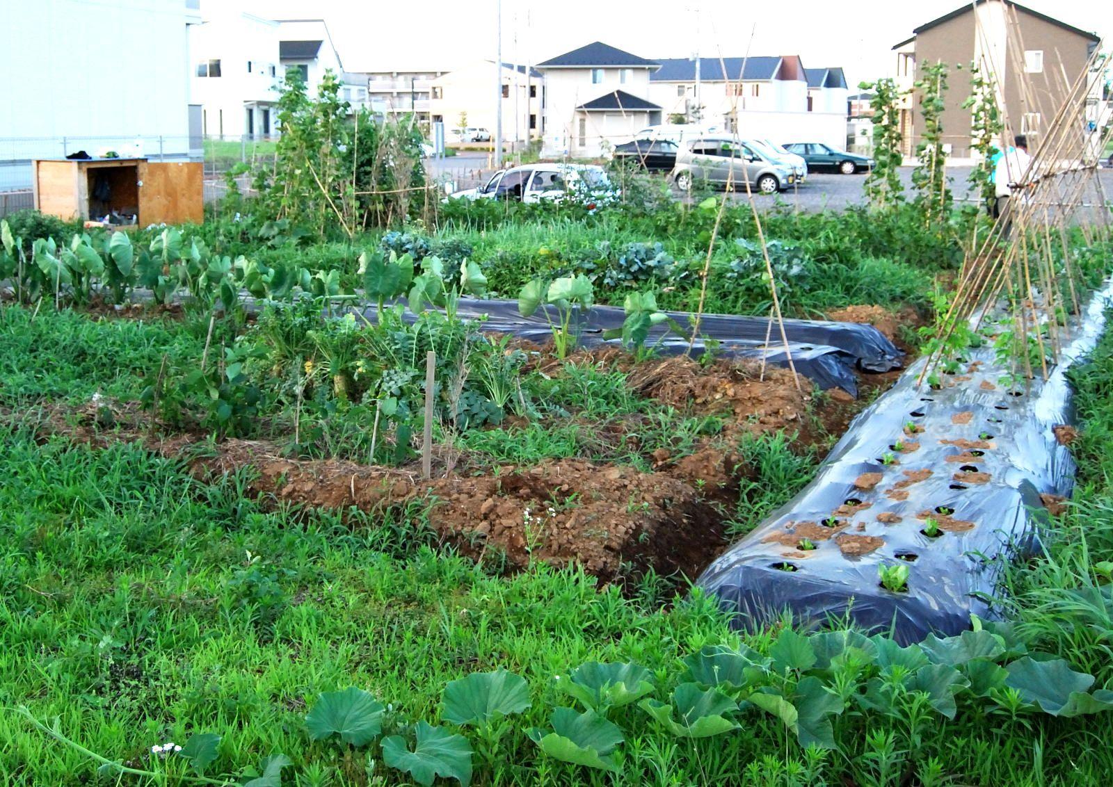 Garten Im Hinterhof Landschaftsbau Ideen Woohome Kleine Pläne, Rasen Und  Deko Grünlich Wallpaper Einfache Bilder