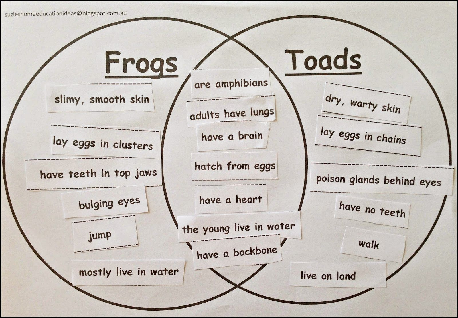 venn diagram of reptiles and amphibians mk4 golf 1 8t wiring life cycle a frog education science pinterest