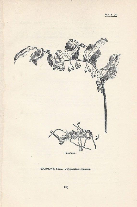 Antique Flower Print, 5