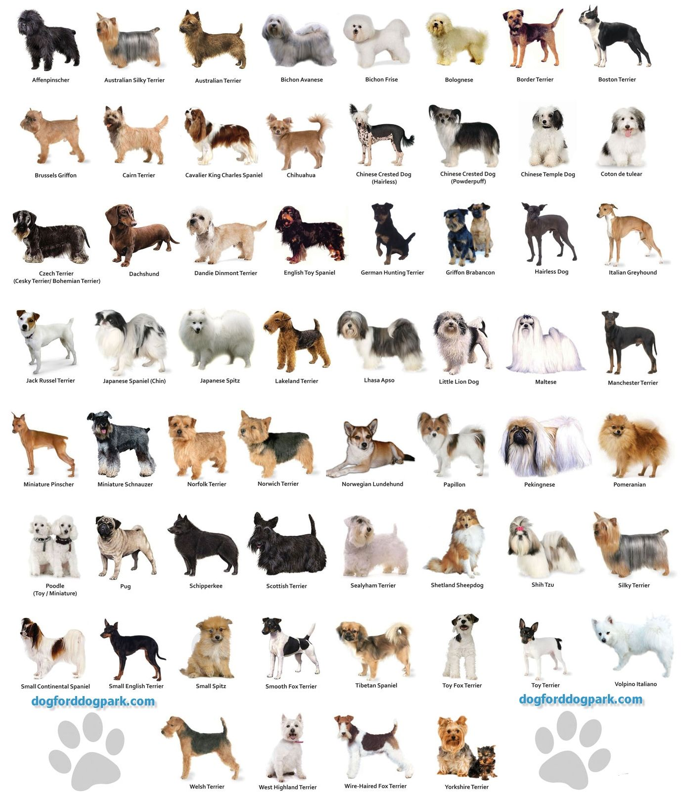 Dog Breeds List - Search 300 dog breeds info