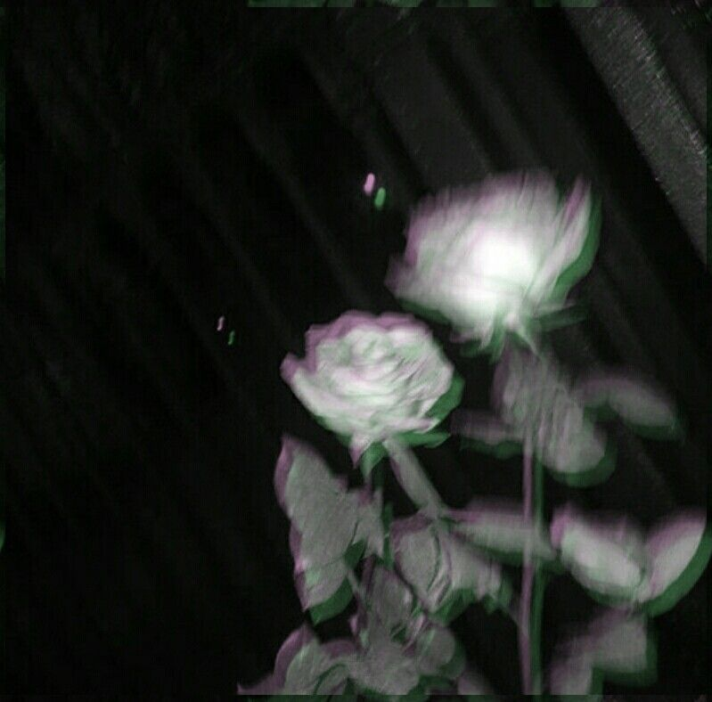 And Black Flower Grunge Rose Sad Tumblr White: White Roses Are So Beautiful