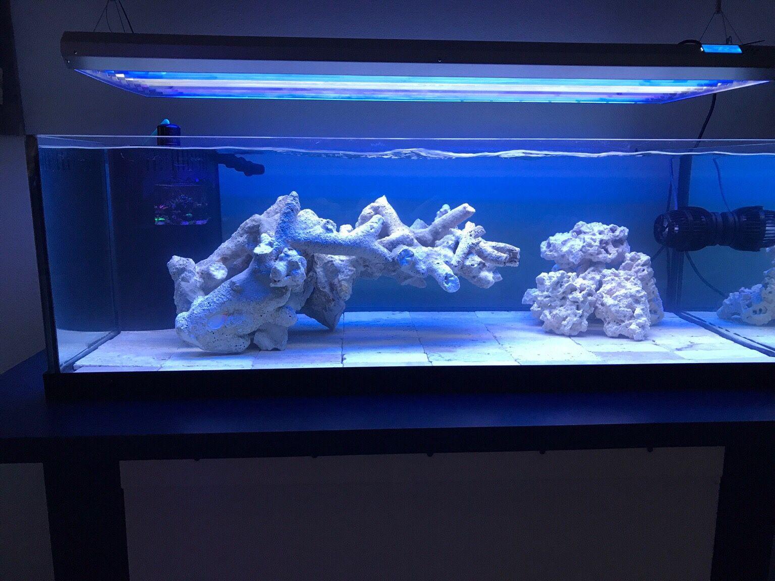 Pin On Saltwater Fish Tanks
