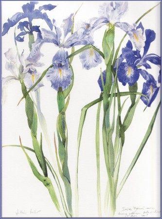 iris art nouveau - Google Search