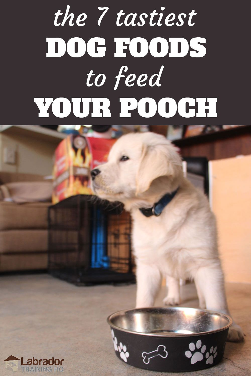7 Tastiest Dog Foods To Feed Your Pooch Dog food recipes