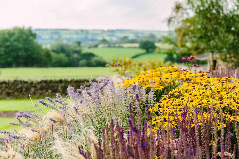 Country Garden-bestall-and-co-yorkshire-modern-planting-dutch ... on planting a garden, drought tolerant landscape design, modern planting design,