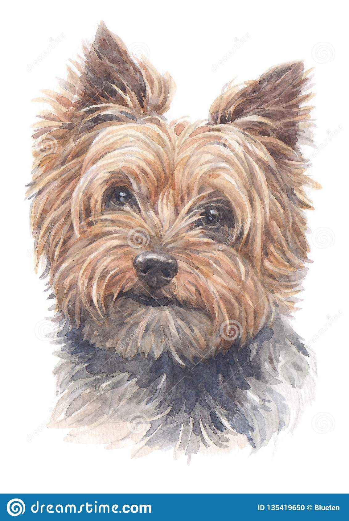Photo About Head Painting Of Yorkshire Terrier Dog Breed Water Colour Technique Image Of Techniques Watercolour Head Yorkie Painting Watercolor Dog Dog Art [ 1689 x 1132 Pixel ]