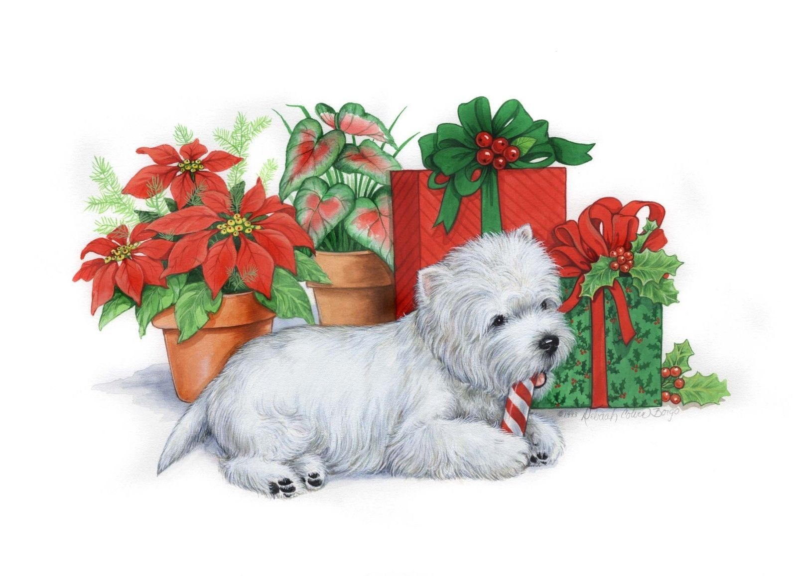 $15 - Westie Christmas Cards \