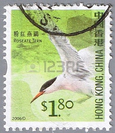 Roseate tern, series devoted to the birds, stamp printed in Hong Kong ,circa 2006