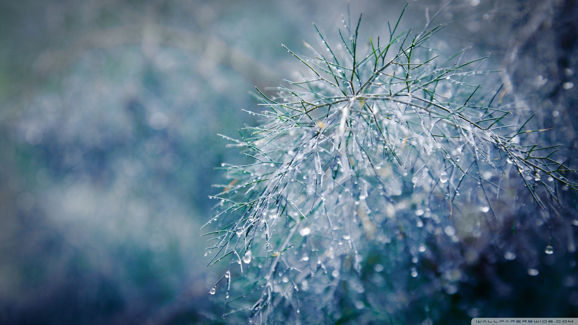 Rain Drops On Mirror Wallpapers x Обои