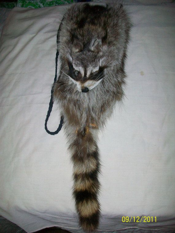 Raccoon Skin Possibles Bag From Elusive Wolf Mountain Man
