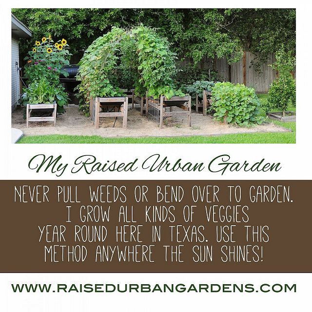 Urban Vegetable Gardening For Beginners: DIY Projects And Ideas For The Home (With Images)