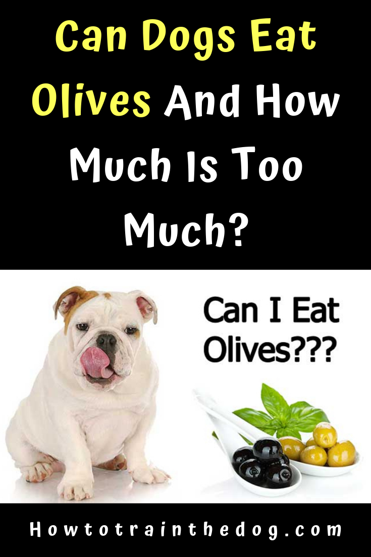 Can Dogs Eat Olives And How Much Is Too