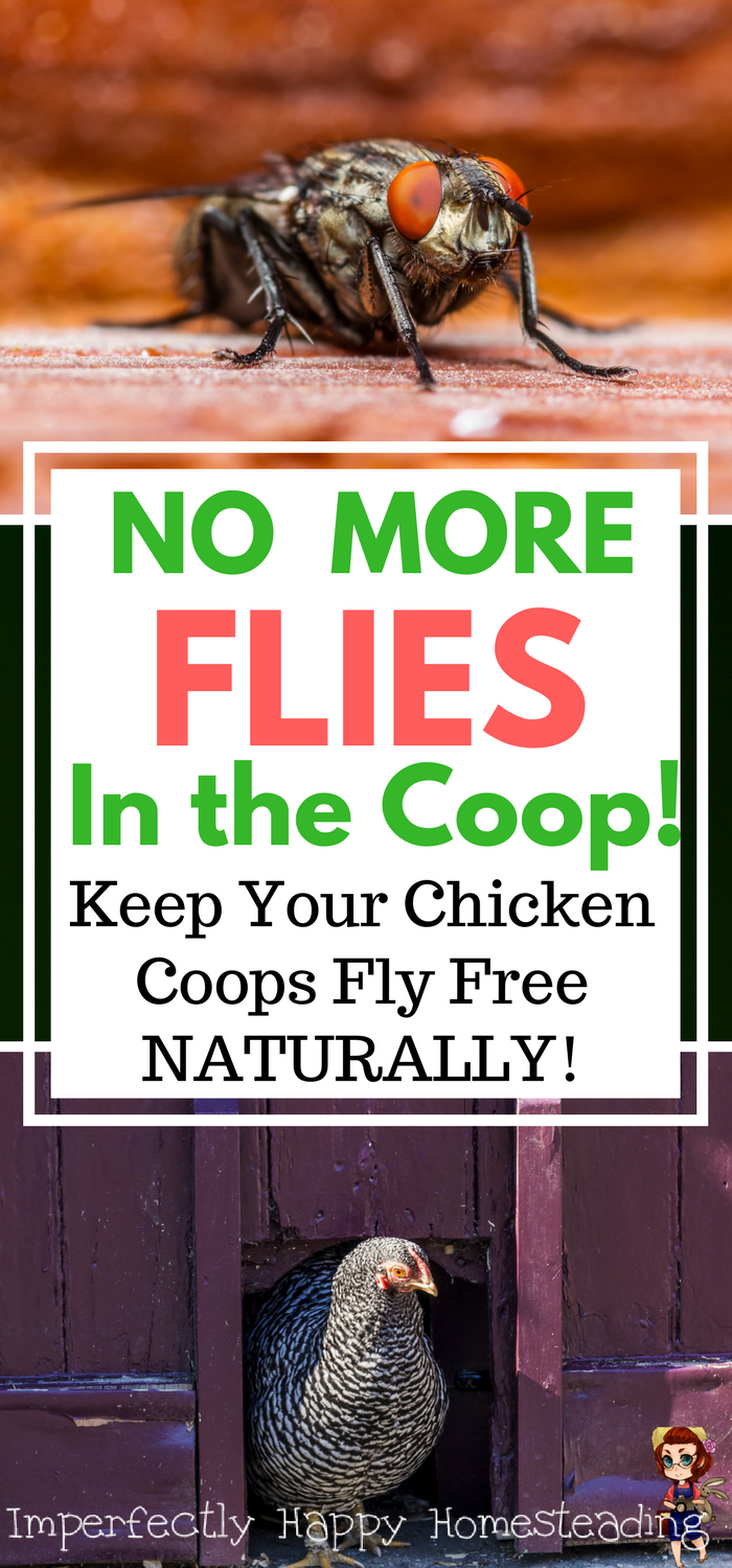 Backyard Chickens And Flies flies in the coop how to get rid of them naturally | *~ posts