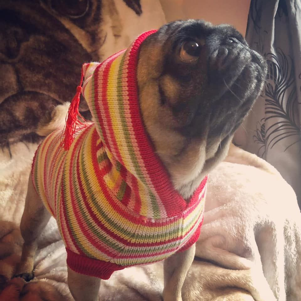 Urban Pup Rainbow Sweater Available At Www Ilovepugs Co Uk Sizes S