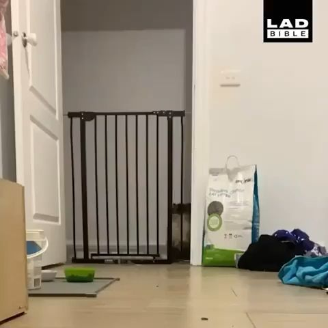 This Cat Has A Little Bounce In Its Step 😸 -  This Cat Has A Little Bounce In Its Step 😸  - #AdorableKittens #bounce #Cat #CatsandKittens #FunnyKittens #little #Step