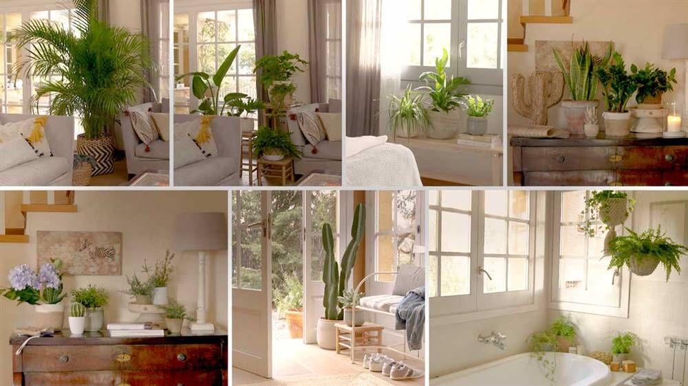 Cómo decorar con plantas cada rincón de casa | Plantas ...
