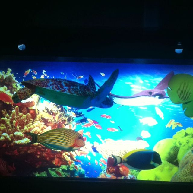 Best night light fake aquarium no water or mess and the for Fake artificial aquarium fish tank