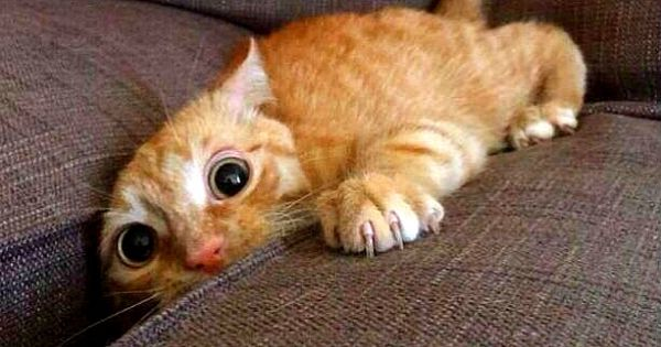 14 raisons pour lesquelles les chats sont les PIRES animaux que la terre ait jamais porté... Vraiment.