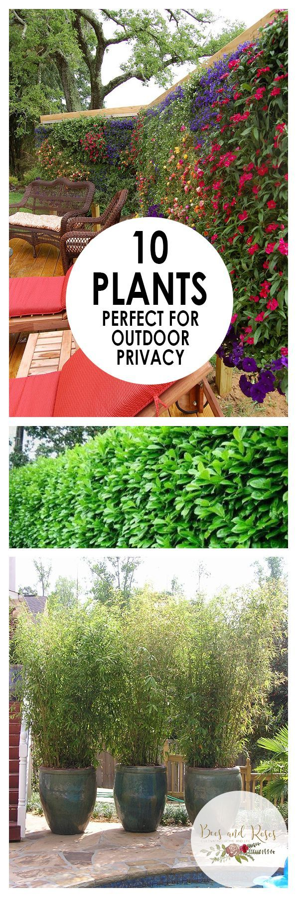 Good 10 Plants Perfect For Outdoor Privacy   Bees And Roses