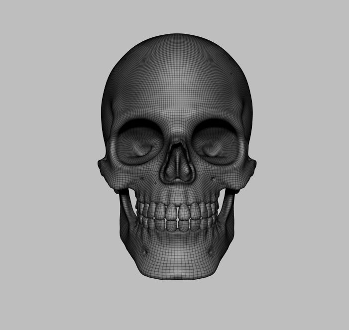 Skull 3D Model | Download Royalty Free Anatomy (Science Only) 3D