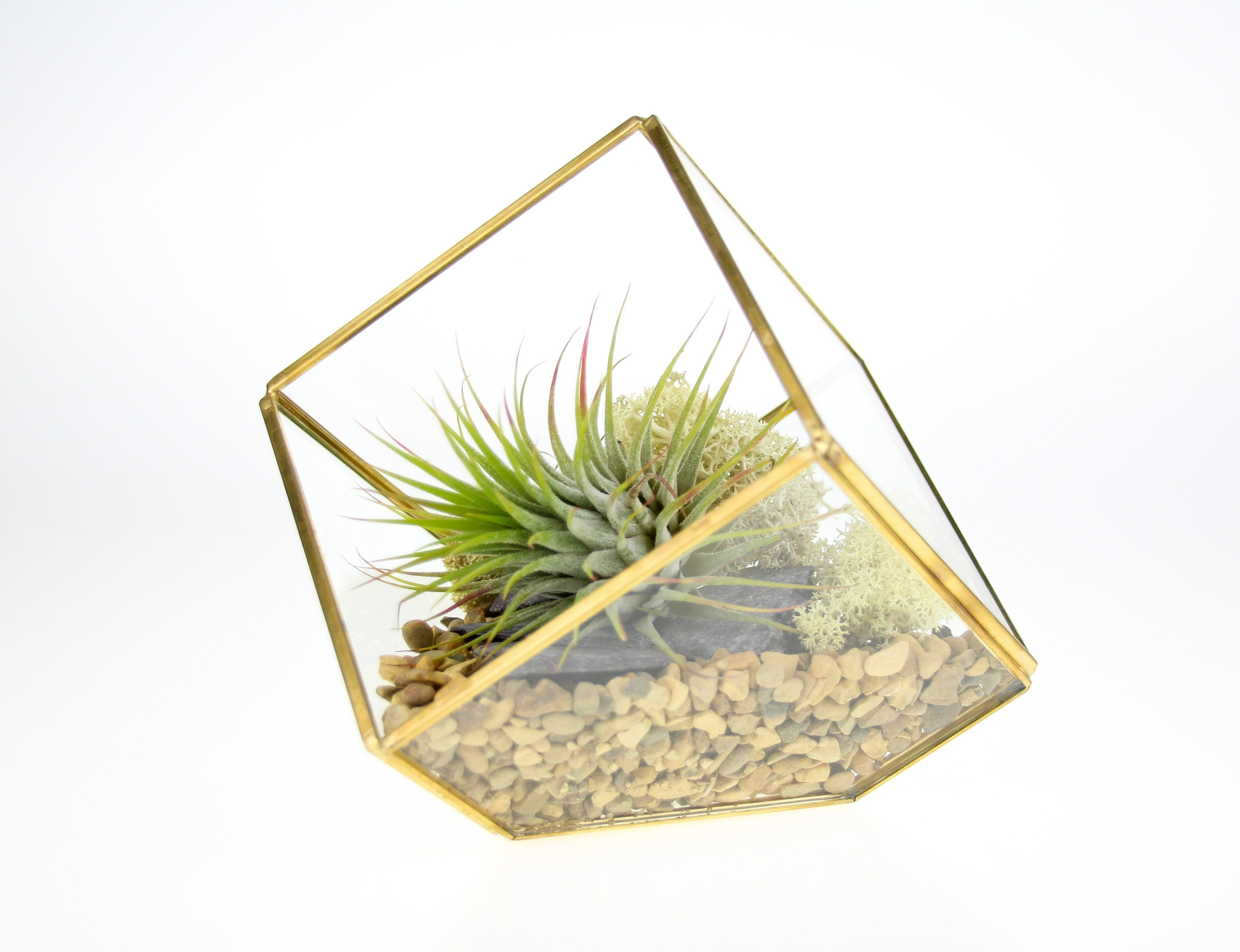 Square Geometric Terrarium Kit with an Elegant Air Plant - Complete Kit - Natural Gravel & White Moss