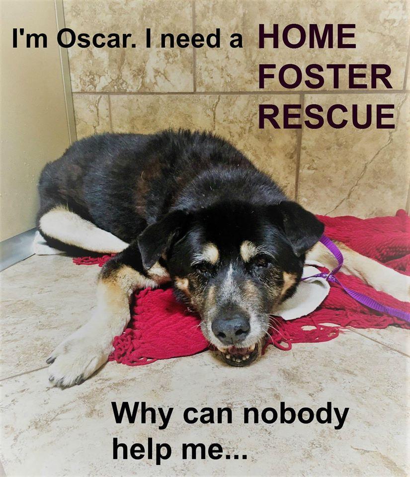 Oscar needs a RESCUE ADOPTER or FOSTER! Hoping