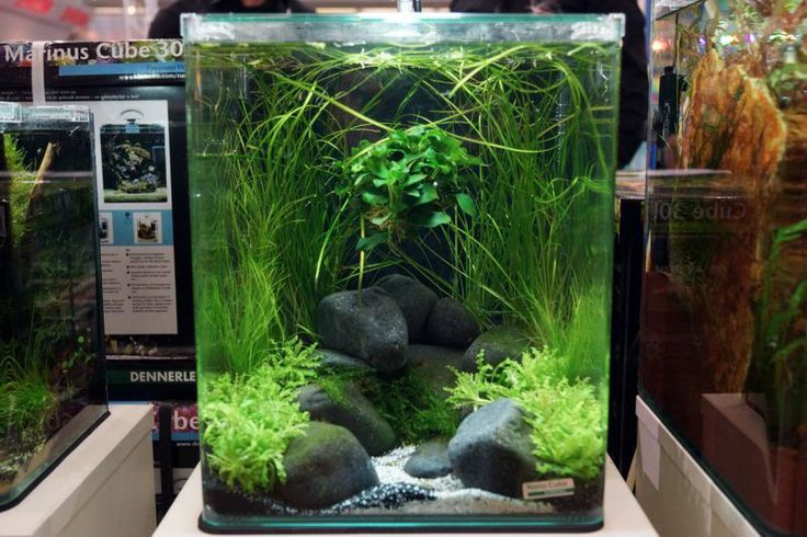 aquascaped nano cube indoor aquatic environments. Black Bedroom Furniture Sets. Home Design Ideas