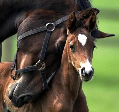 }{   Mother loving her foal
