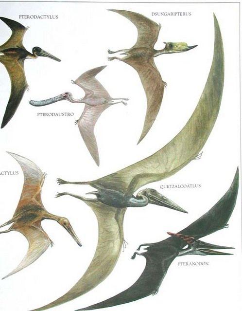 Pteranodon vs Pterodactyl  8580b8755
