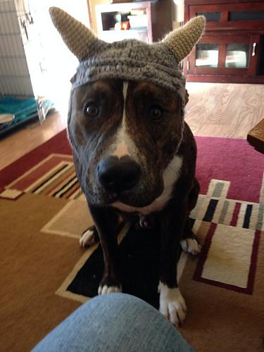 The hat fits large and medium size dogs nicely. It can also fit most ...