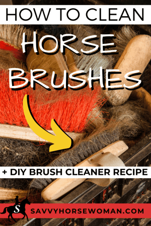 Photo of How to Clean Horse Brushes – Savvy Horsewoman