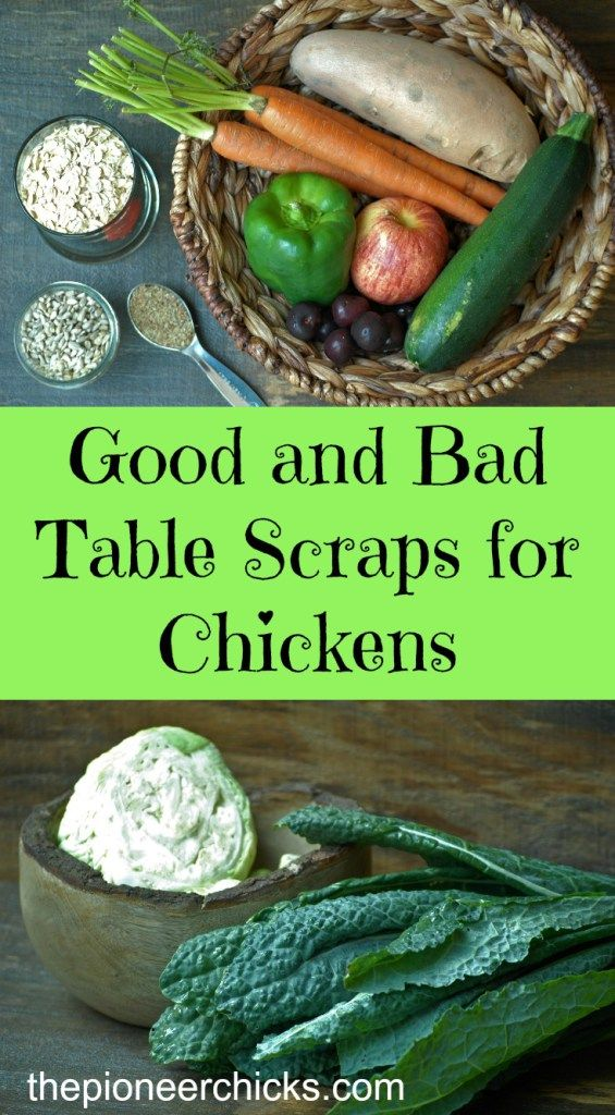 Good And Bad Table Scraps For Chickens Chickens The Pioneer